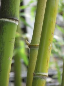 Be Flexible Like A Bamboo Tree